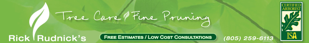 Rick Rudnick's Tree Care and Fine Pruning