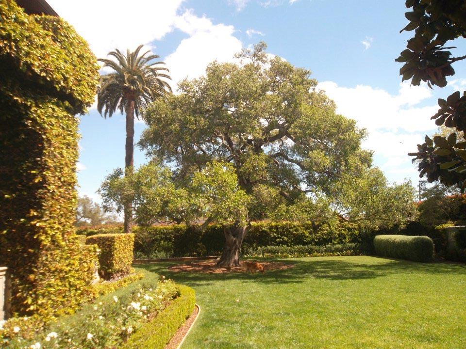 Rick-Rudnick-Artistree-Santa-Barbara-San-Luis-Obispo-Ventura-Arborist-after-pruning-04